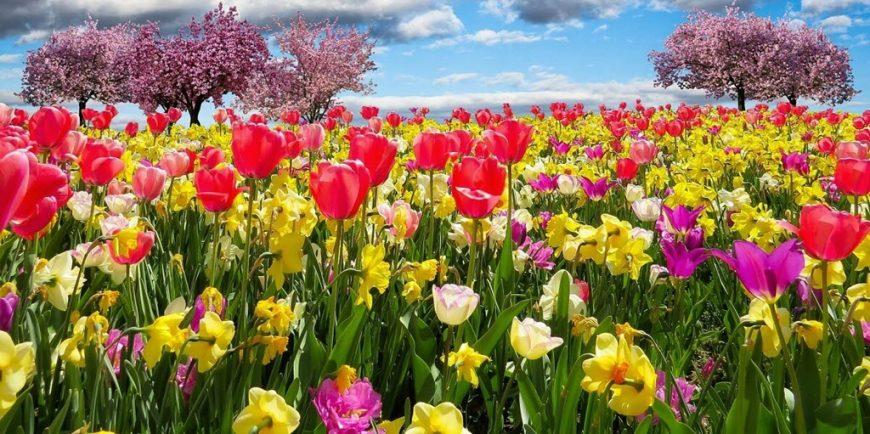 lente aanbieding